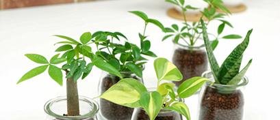 Chọn Cây Không Đất - Tiny Plant