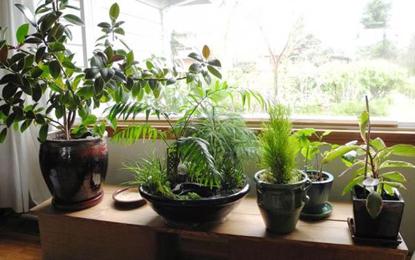 Cây Cảnh Mini - Tiny Plant Tự tay trang trí không gian sống với cây cảnh mini