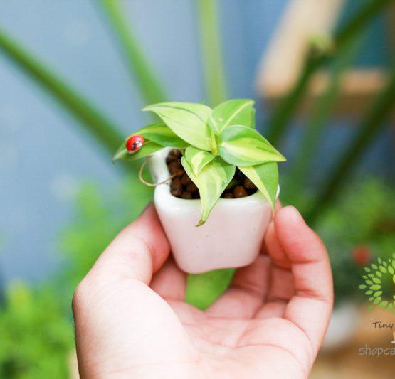 Cây Cảnh Mini - Tiny Plant