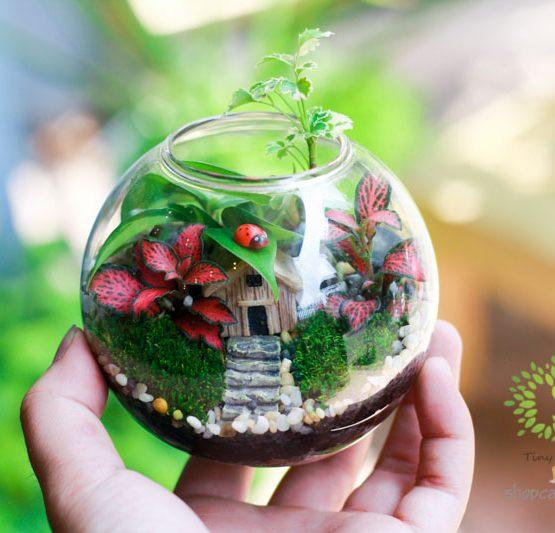 Cây Cảnh Mini Trong Bình Thủy Tinh- Tiny Plant