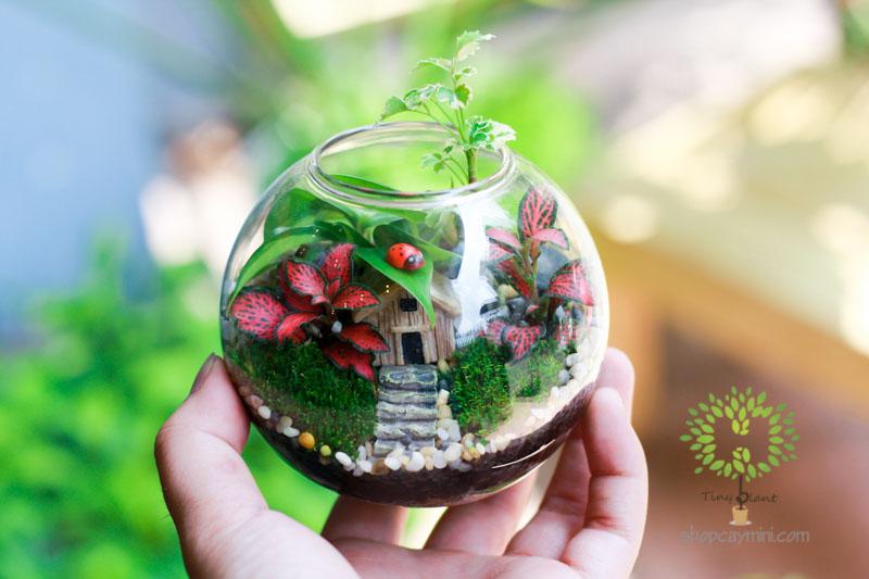 Cây Cảnh Mini Trong Bình Thủy Tinh- Tiny Plant Cây Cảnh Mini