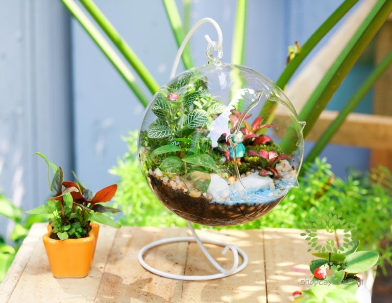 Cây Terrarium Đẹp - Tiny Plant Cây Terrarium