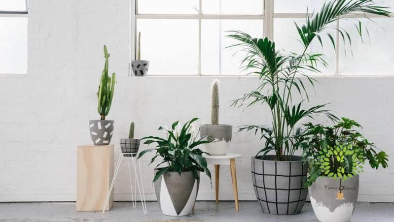 Cây Cảnh Mini Trong Nhà - Tiny Plant Kinh nghiệm lựa chọn chậu trồng cây cảnh mini trong nhà