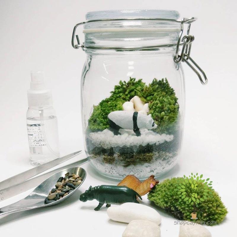 Cây Cảnh Mini Trong Bình Thủy Tinh - Tiny Plant Tự tay trang trí cây cảnh mini trong bình thủy tinh - Terrarium