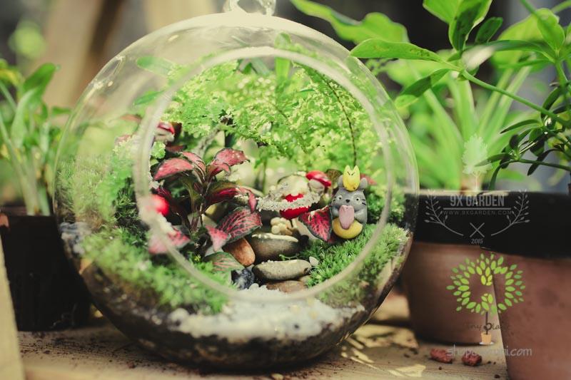 Cây Cảnh Mini Trong Bình Thủy Tinh - Tiny Plant Những điều chưa biết khi chọn chậu cây cảnh mini dựa trên cung hoàng đạo?