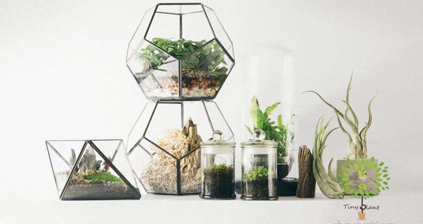 Cây Cảnh Mini Trong Bình Thủy Tinh - Tiny Plant