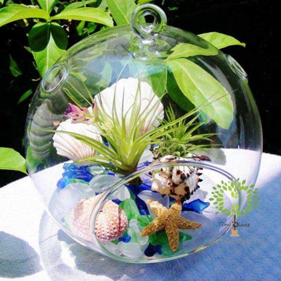 Cây Không Khí Hồng Hạnh - Tiny Plant