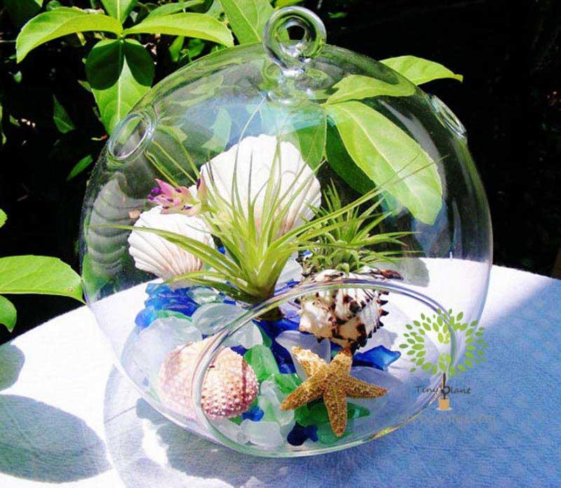 Cây Không Khí Hồng Hạnh - Tiny Plant Cây Không Khí