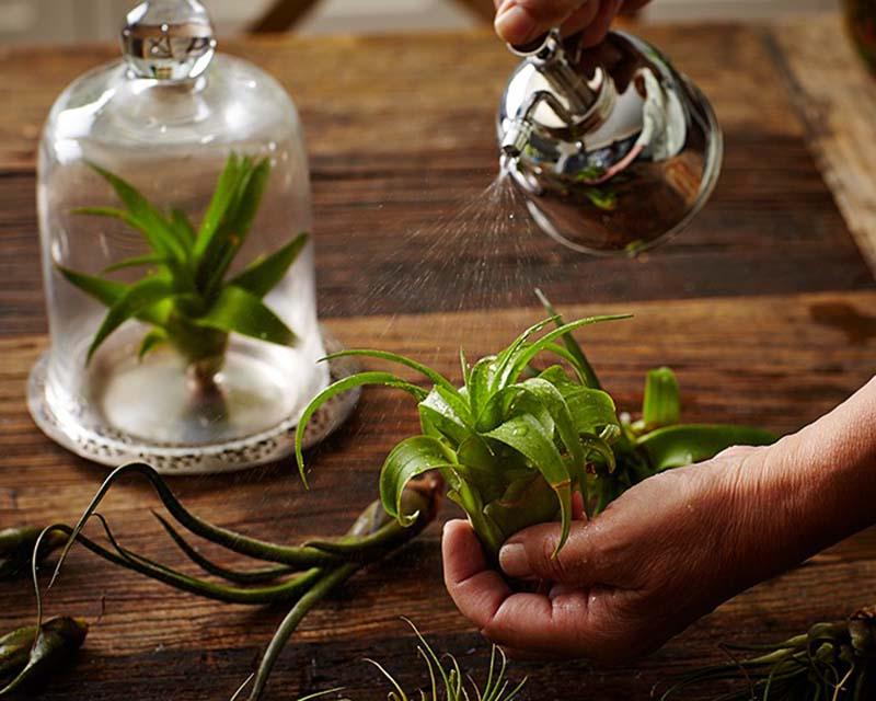 Chăm Sóc Cây Không Khí - Tiny Plant Cây Không Khí