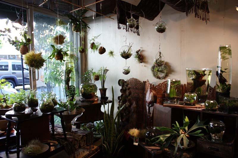 Shop Cây Không Khí - Tiny Plant Cây Không Khí