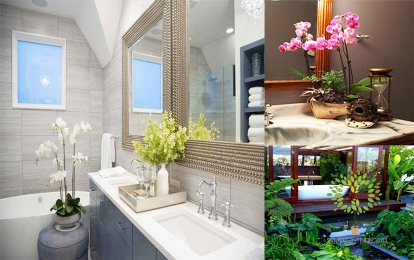 Trang Trí Cây Cảnh Mini Trong Nhà Tắm Bạn nghĩ sao với ý tưởng trang trí phòng tắm của mình bằng cây cảnh