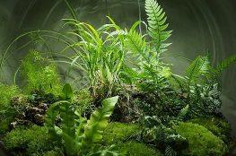 Loá mắt trước vẻ đẹp từ khu vườn nghệ thuật terrarium